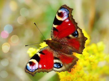 Vlinder in transformatie